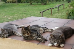 cat boarding near fourways